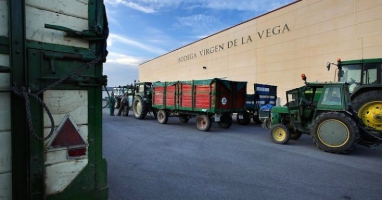Bodegas Cooperativa Vírgen de la Vega