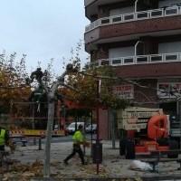 Labores de poda en los árboles de la ciudad